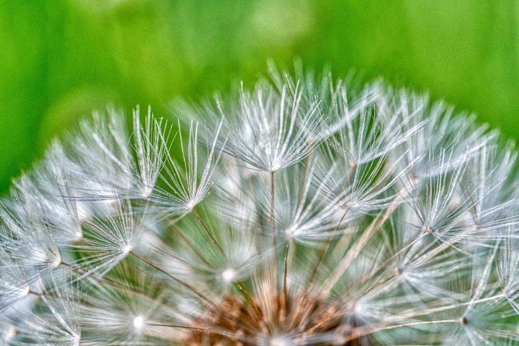 alergia oczyszczacz powietrza